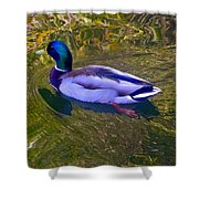 Colorful Duck Shower Curtain