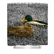 Colorful Ducks Shower Curtain