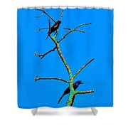 Colorful Duet Shower Curtain