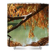 Colorful Fall Bald Cypress Shower Curtain