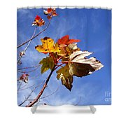Colorful Fall Leave's With Blue Sky Shower Curtain