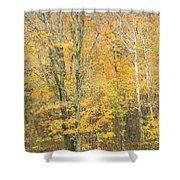 Colorful Fall Trees In Maine Shower Curtain