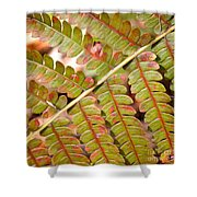 Colorful Fern Square Shower Curtain