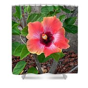 Colorful Flower Shower Curtain