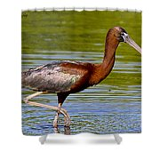 Colorful Glossy Ibis Shower Curtain