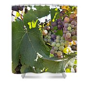 Colorful Grapes Growing On Grapevine Shower Curtain