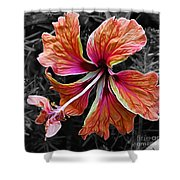 Colorful Hibiscus On Black And White 2 Shower Curtain by Kaye Menner