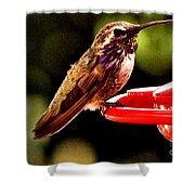 Colorful Juvenile Humingbird Shower Curtain