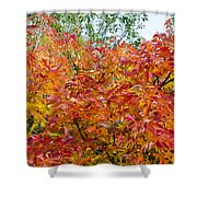 Colorful Leaves In Autumn Shower Curtain