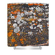 Colorful Moss Spots On A Gneiss Rock Shower Curtain