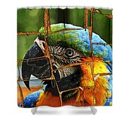 Colorful Notes Shower Curtain
