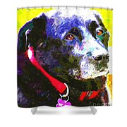 Colorful Old Dog Shower Curtain