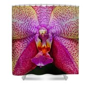 Colorful Orchid Shower Curtain