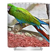 Colorful Parrot Shower Curtain