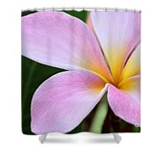 Colorful Pink Plumeria Flower Shower Curtain