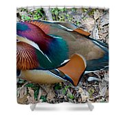 Colorful Plume Shower Curtain