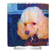 Colorful Poodle Shower Curtain