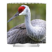 Colorful Sandhill Shower Curtain