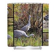Colorful Sandhill Crane Collage Shower Curtain