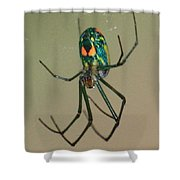 Colorful Spider In The Swamp Shower Curtain
