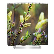 Spring Pussy Willows Shower Curtain