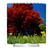 Colorful Spring Shower Curtain