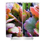 Colorful Succulents In Stereo Shower Curtain