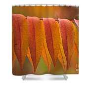 Colorful Sumac Foliage In Fall Shower Curtain