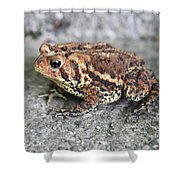 Colorful Toady Shower Curtain