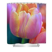 Colorful Tulip Shower Curtain by Kathleen Struckle