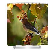 Waxwing In Fall Colors Shower Curtain