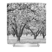 Colorless Cherry Blossoms Shower Curtain