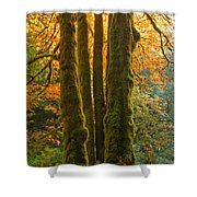 Colors In The Rainforest Shower Curtain by Adam Jewell