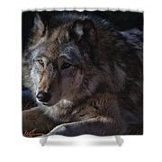 Colors Of A Wolf Shower Curtain
