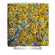 Colors Of Autumn - Yellow - Featured 3 Shower Curtain