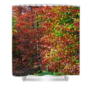 Colors Of Fall 4 Shower Curtain
