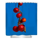Colors Of Winter - Featured 3 Shower Curtain