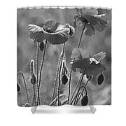 Colour Blind Poppies 1 Shower Curtain