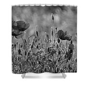 Colour Blind Poppies 2 Shower Curtain