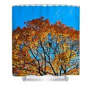 Colourful Autumn Tree Against Blue Sky Shower Curtain