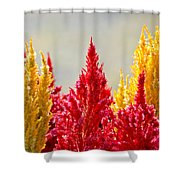 Colourful Plants Shower Curtain