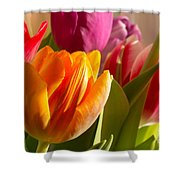 Colourful Tulips In Sunlight Shower Curtain