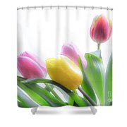 Colourful Tulips That Are Digitally Softened Shower Curtain