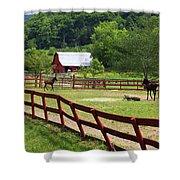 Colts On A Farm Shower Curtain