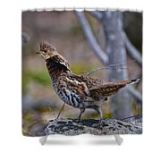 Coltsfoot Ruffed Grouse Shower Curtain
