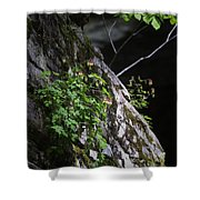 Columbine Flowers On River Rock Shower Curtain
