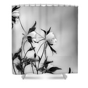 Columbines In Black And White Shower Curtain