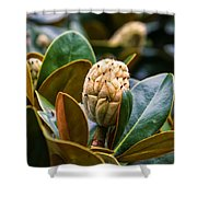 columnar Southern magnolia Shower Curtain