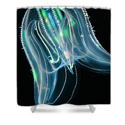 Comb Jelly Shower Curtain