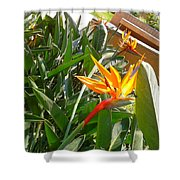 Combination Of Yellow-orange And Red Flower   Shower Curtain